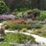 Copious flowering of Callistemon and Leptospermum, image Fiona Johnson