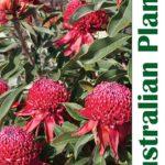 Winter 2019 issue of Australian Plants