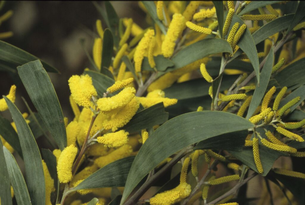 Showing yellow flowers