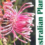 Australian Plants, Winter 2021 – Isopogons and petrophiles
