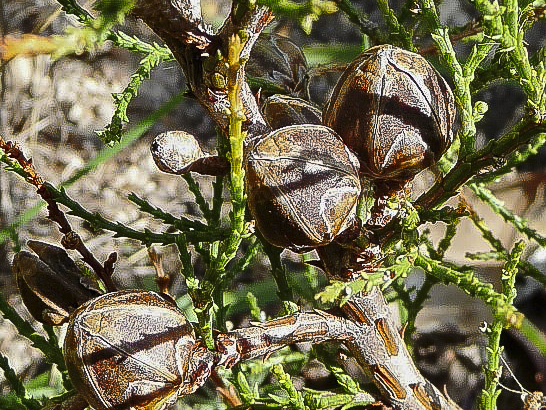 Showing seed pods