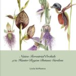 Native Terrestrial Orchids of the Hunter by Lynda McPherson