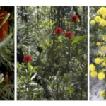 Demystifying plant names