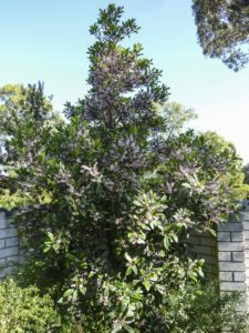 shows tree