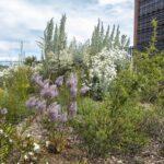 The roof top garden in full bloom, image Heather Miles