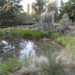 Large pond, Walcott garden, Canberra, photo Ros and Ben Walcott
