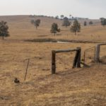 Dried out paddocks, image Heather Miles