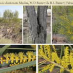 Flora of the Kimberly with Dr Russell Barrett