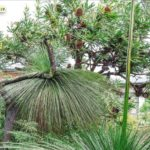 Harry Loots' prize winning native garden in North Sydney