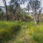 Barren Grounds near Kiama, image Heather Miles