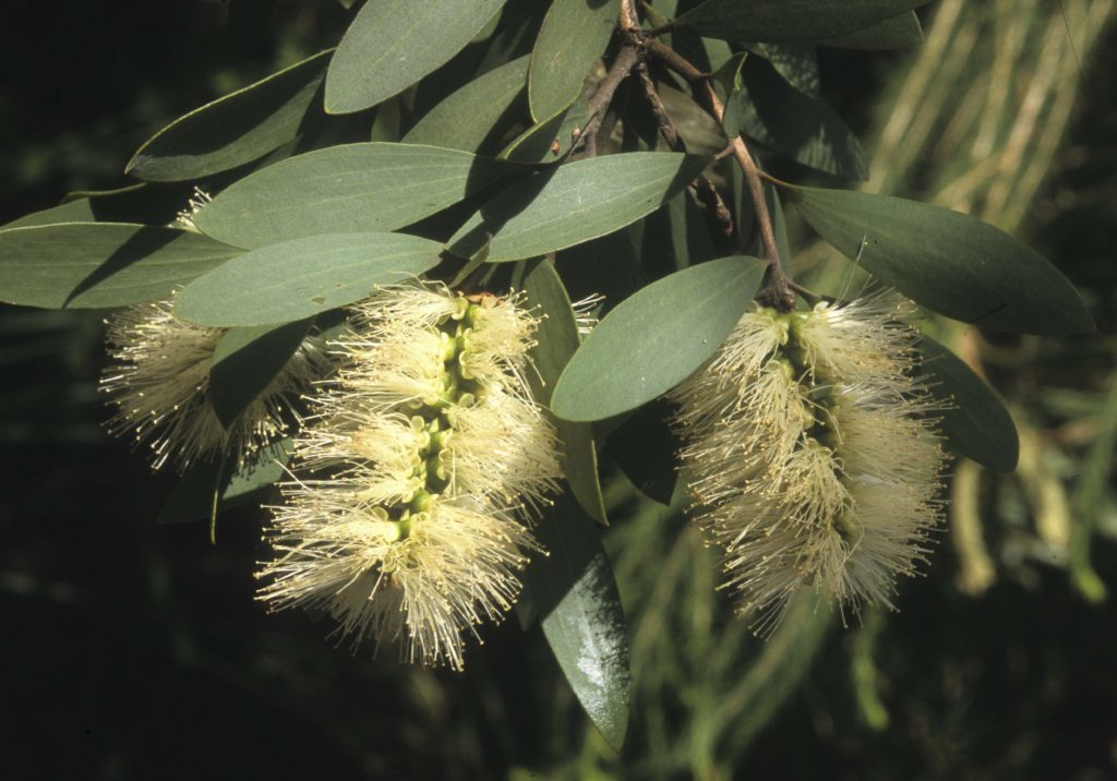 shows flowers