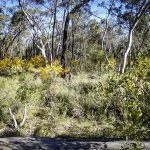 Complex mosaic of multi-level ground cover, shrub and canopy as would have been seen 200 years ago, image Andrew Knop