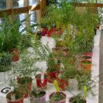 Plants inside Caley's Pavilion by Jan Williamson
