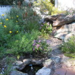 Pond surrounded by plants, image Jeff Howes