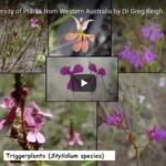 Biodiversity of plants in SW WA