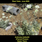 Plant table at Sutherland meeting, June 2020