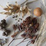 Seeds, image Heather Miles