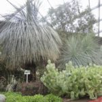 Australian native plants in other countrie