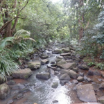 Rainforest recovery in northern NSW