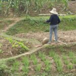 Planting in China, image Glenda Browne